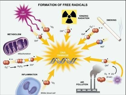 причины возникновения свободных радикалов